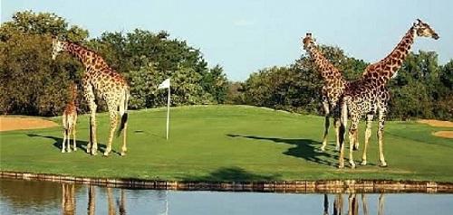 SA Golf 0